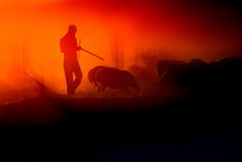 Sunset And Shepherd. Red And Black Nature Background.