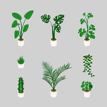 Set Of Decorative Houseplants Isolated On White Background. Bundle Of Trendy Plants Growing In Pots  In Isometric. Flat Colorful Vector