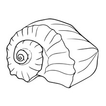 Beautiful Seashell Line Drawing Illustration