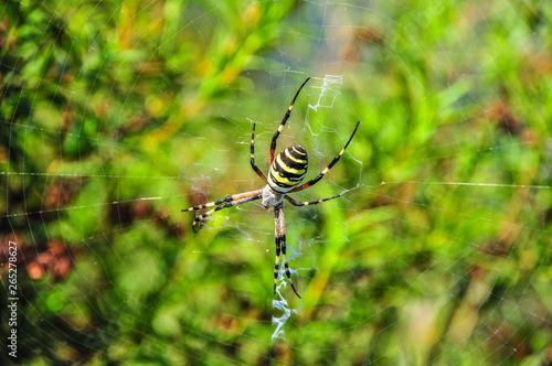 araignée, toile, insecte, nature, animal, macro, jaune, arachnida, noir, jardin, Canvas Print
