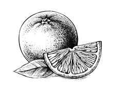 Slice And Whole Of Juicy Orange Fruit On White