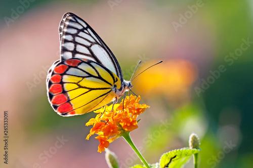 In de dag Vlinder Butterfly on a flower