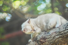 A Cute Small Kitten White-brown Color Age 30 Days Climbing Tree Branch With Bokey Nature Blurred Background.