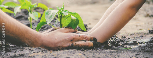Foto op Aluminium Tuin A child plants a plant in the garden. Selective focus.