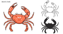 Crab Vector By Hand Drawing.crab Silhouette On White Background.Bairdi Crabs Art Highly Detailed In Line Art Style.Animal Pictures For Coloring