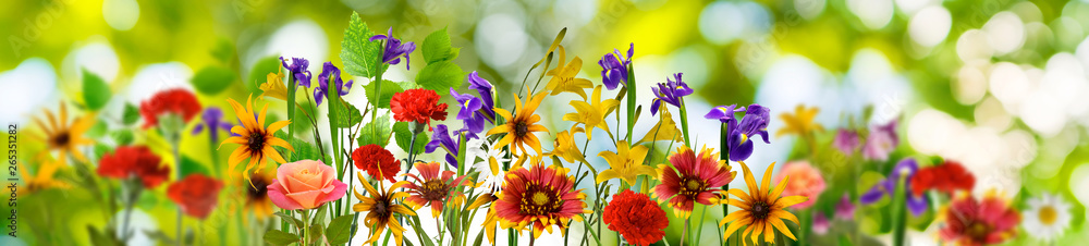 Fototapety, obrazy: image of many beautiful flowers in the garden close up