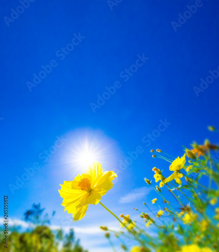 Bleu fonce Yellow flower against sunlight on blur bright blue sky background, nature background concept