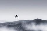 ptak lecący nad minimalnym krajobrazem ze wzgórzami i mgłą, spokojny krajobraz - 265366053