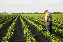 Man Using Digital Tablet In Field