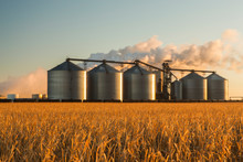 The Poet Biorefinery, An Ethanol Producer, And Corn Field, Near Groton; South Dakota, United States Of America