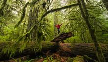 Man Standing On A Fallen Tree ...