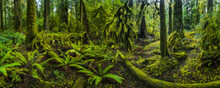 The Lush Rainforest Of Cathedr...