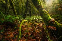 The Beautiful Rainforest Of Goldstream Provincial Park; British Columbia, Canada