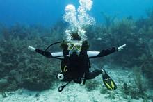 Scuba Diver At Three Amigos Dive Site, Belize Barrier Reef; Belize
