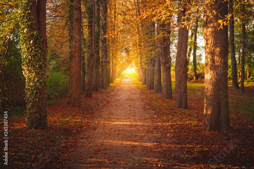 Fotomural Tree avenue in autumn during sunset