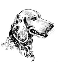 Hunting Dog Head. Ink Black An...