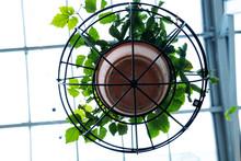 Planta Enredadera En Maceta De Barro Y Estructura De Hierro Circular Colgada Del Techo Y Fondo Desenfocado Iluminado Luz Dia