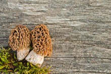 Edible Spring Mushrooms (Morchella Esculenta) On An Old Wooden Table