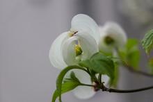 京都ぶらり、春のハナ...
