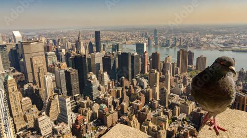 nyc pigeon on a ledge , new york city Canvas Print