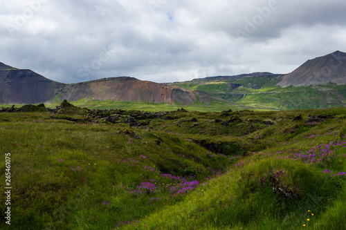 Photo Stands Pale violet Amazing landscape of Iceland green mountains.