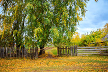 Autumn Landscape With Big Birch And Fence In Countryside