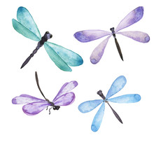 Blue And Lilac Dragonfly Colle...