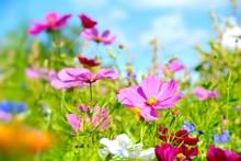 Blumenwiese - Sommerblumen Grußkarte