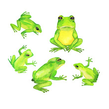 Cute Green Wild Frog Isolated ...