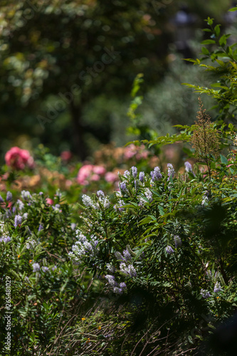 Photo  Park, garden in Barcelona, Spain in Europe