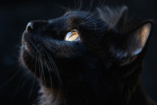Portrait Of A Black Cat