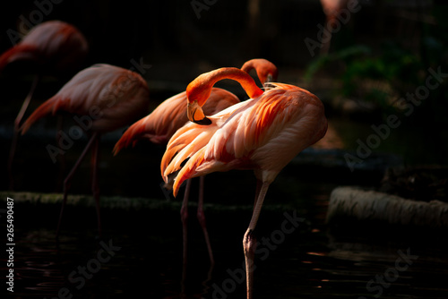 Photo Stands Flamingo America flamingo