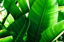 Tropical Nature Greenery Backg...