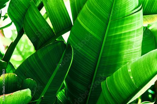 Fotografía  Tropical nature greenery background