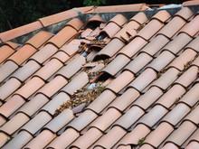 Old Roof Of Tiles Need Repair.