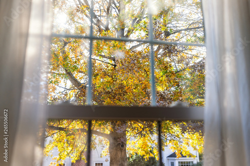 Virginia yellow autumn view through window of colorful oak leaf foliage in northern VA with tree leaves behind glass window blinds curtains and sunlight
