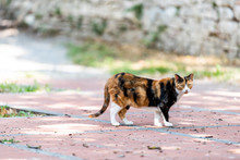 Calico Cat Outside Green Garde...
