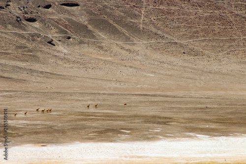 Fotografia, Obraz  Beautiful region of the Atacama Desert, full of colors, light and so many charms, located in Chile
