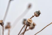 Dry Flowers Arrangement Of Bro...