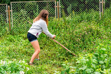 Young Woman Farmer In Garden Cutting Weeds Oat Grass With Sickle Scythe Tool In Green Summer In Ukraine By Fence