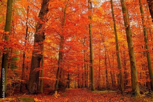 Cadres-photo bureau Brique automnal nature