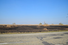 Burned Grass Along The Route