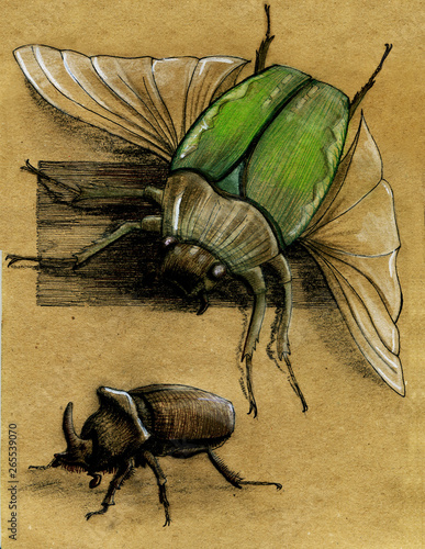 Valokuva illustration of maybeetles drawn with pastel crayons on craft paper
