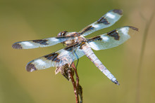 Wings And Backside Of A Skimmer Dragonfly - Perched Between Hunting Trips On A Twig With A Beautiful Green Background - Taken In Governor Knowles State Forest In Northern Wisconsin