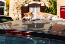 Cat Resting On The Hot Roof Of...