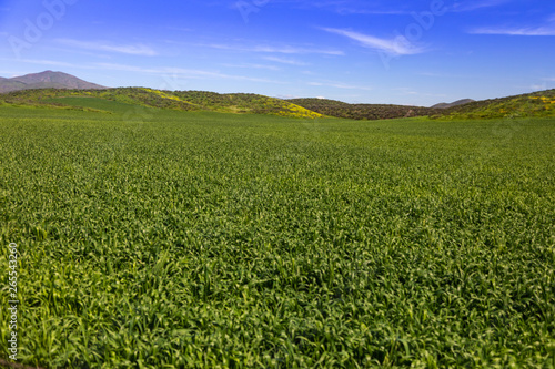 Fotografija Lush Green Farm Land Landscape With Hills In The Distance