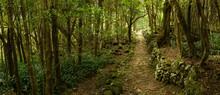 Dirt Path Through Remote Forest