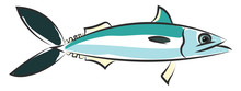 Drawing Of The Mackerel Fish Vector Or Color Illustration