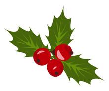 Christmas Holly Berry Mistletoe Vector Or Color Illustration