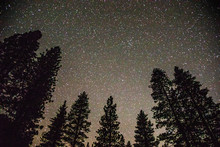 A Starry Sky With Pine Trees I...